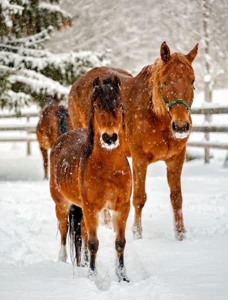 Henniker Winter Horses