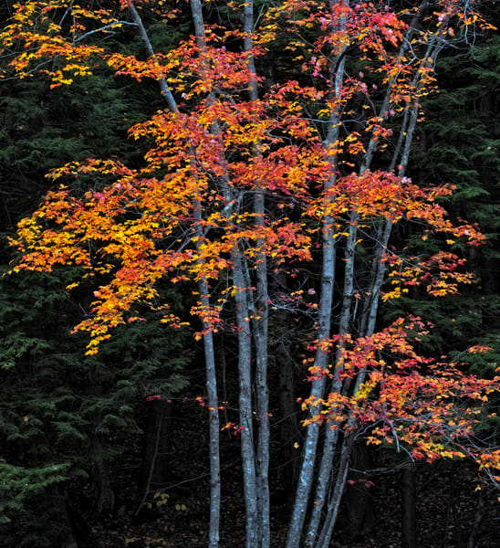 New Hampshire Autumn Foliage