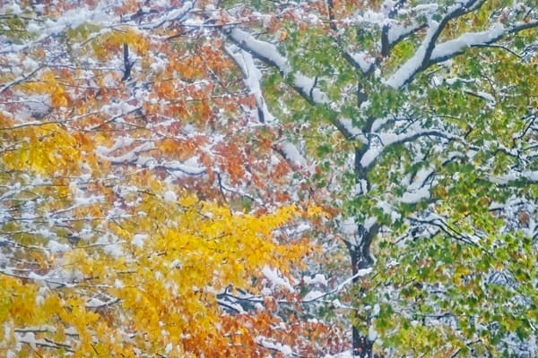 Early snow on New England fall foliage