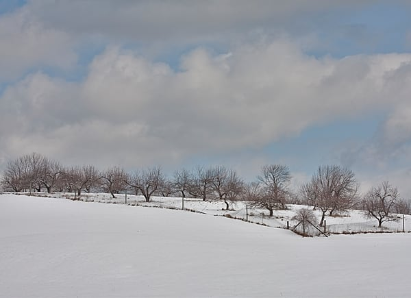Snow-covered orchards at the Canterbury Shaker Village