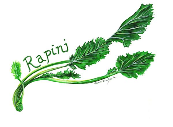 Watercolor Painting of Rapini