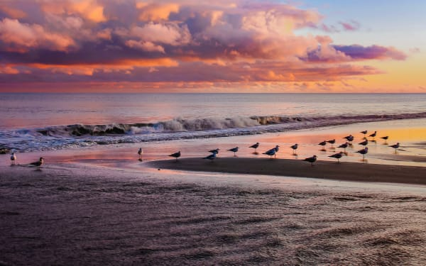 Sunset Gulls Photography Art | Mason & Mason Images