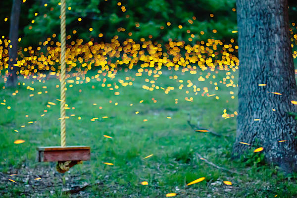 Fireflies by the Ropeswing
