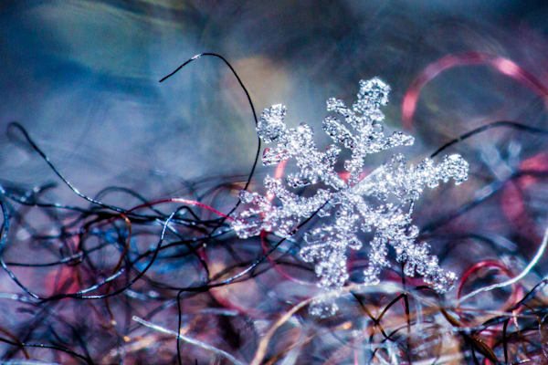 Snowflake On A Mitten Photography Art | Vincent Brady Photography