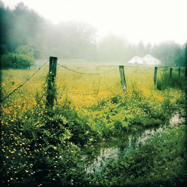 Misty Field of Buttercups photograph - for sale as fine art prints