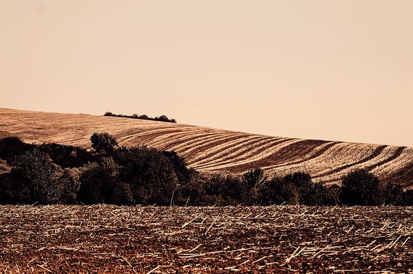 Landscape Golden Textured Fields I Pictorial Landscape Photography Fine Art Print by Silvia Nikolov