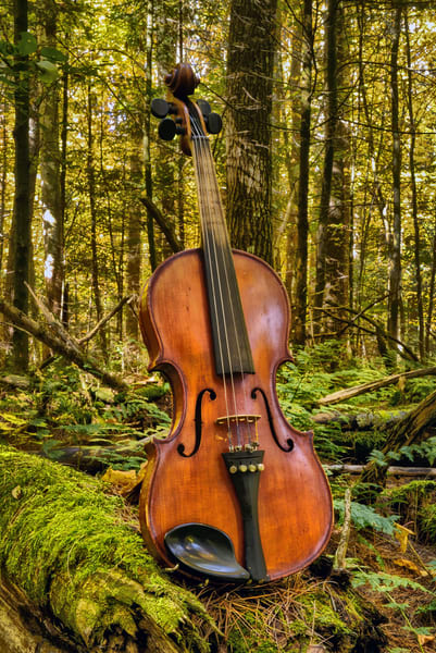 The Woodland Concertmaster Art | Instrumental Art