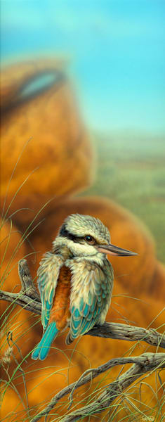 Red-tailed Kingfisher