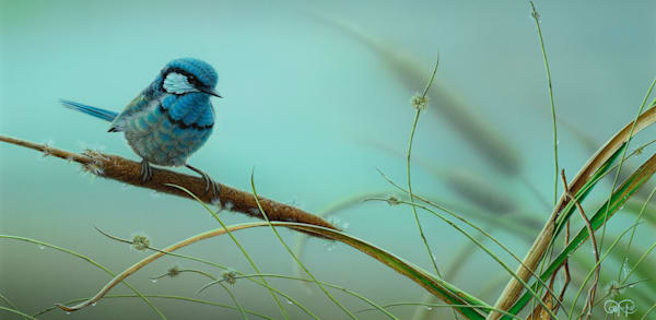 Blue Wren and Reeds