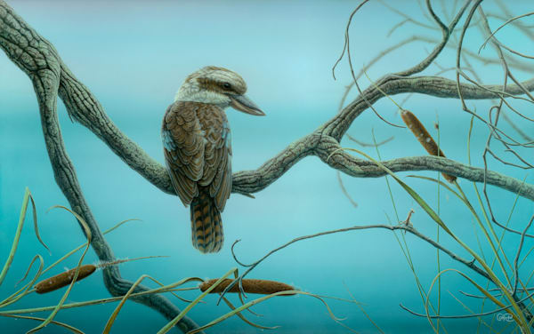 Kookaburra and Mantis