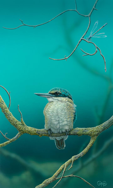 Sacred Kingfisher and Damselfly