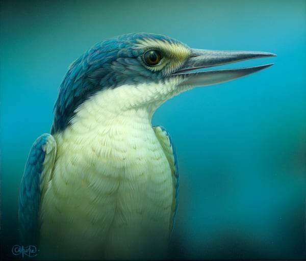 Sacred Kingfisher Portrait