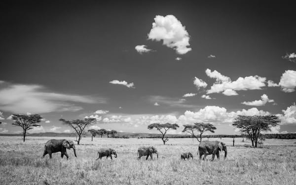 Elephants & Clouds, Tanzania