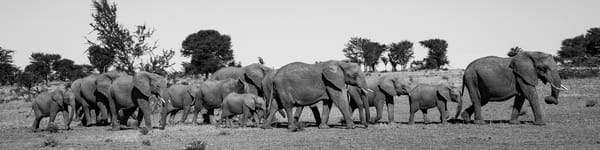 Parade of Elephants II, Tanzania