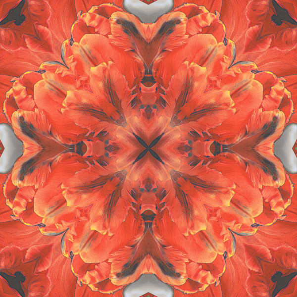 Kaleidoscopic Floral 2.0 (Coral)