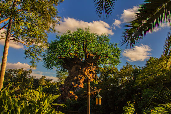 Tropical Tree of Life - Disney Prints for Sale | William Drew