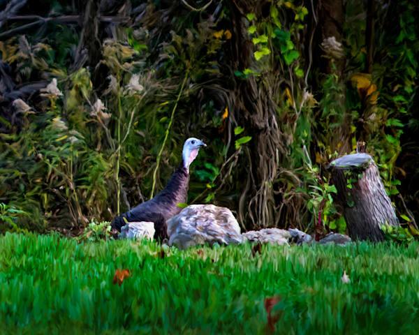 Single Hen Art | MDM photo