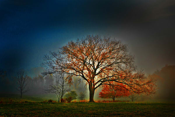 Bridgewater Tree