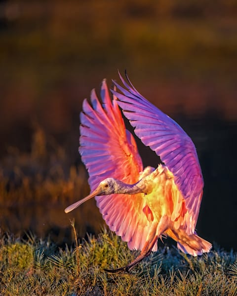 Early Landing Photography Art | John Martell Photography