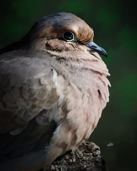 Dove Art | MDM photo