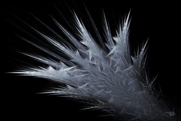 Frozen Burst frost digital art by Cheri Freund