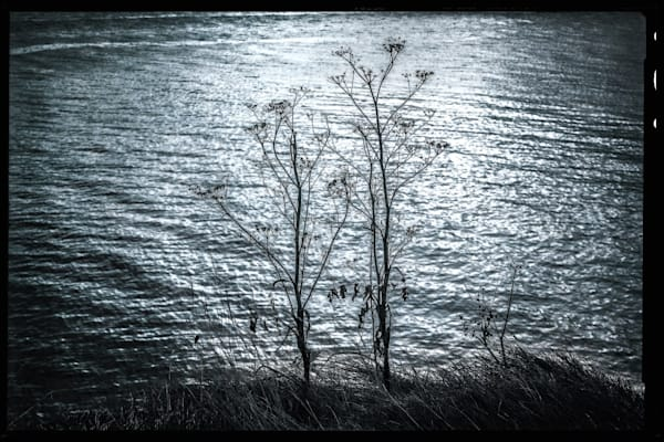 Dsc2245blue Art | Roy Fraser Photographer