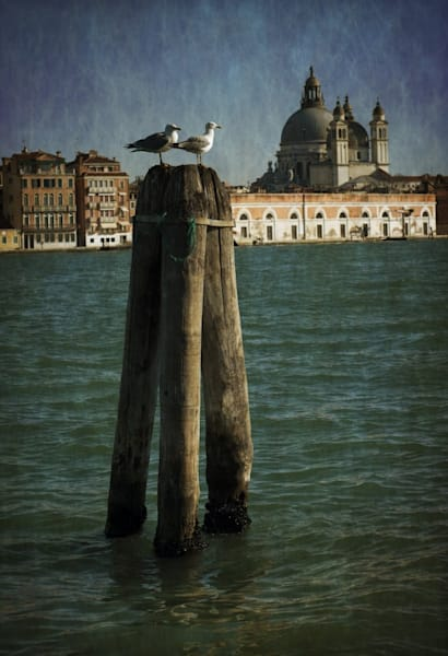 316 Landscape photographer Giudecca Venice Italy skyline Seaguls