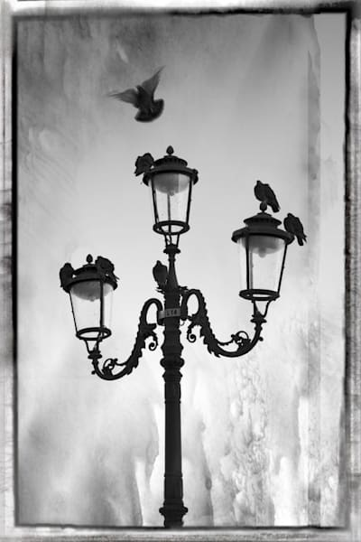 317 Landscape photographer Giudecca Venice Italy Pigeons on light Sulfite
