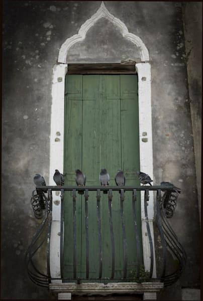 319 Landscape photographer Giudecca Venice Italy pigeons waiting