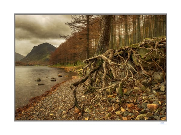 buttermere roots1Afinalrice