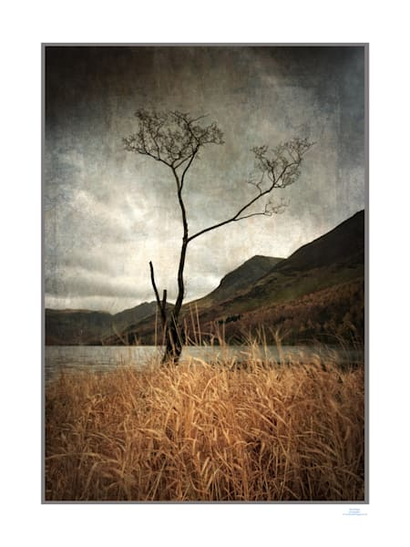 buttermere tree dawn3Bfinalframe