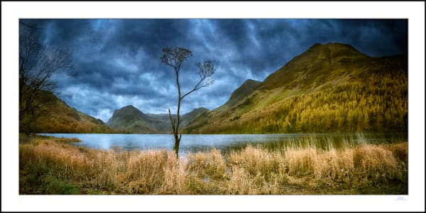 roy fraser buttermere tree lake district uk