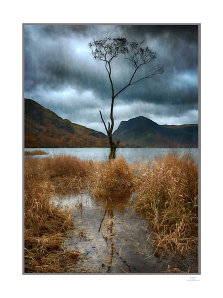 buttermere tree dawn1a