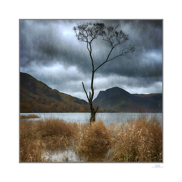 roy fraser buttermere tree lake district2