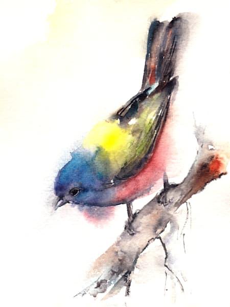 Bunting Bird Art by blacksgallery.ca