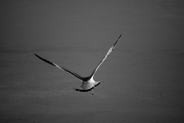 Flying Free Fine Art Wildlife Photography Print