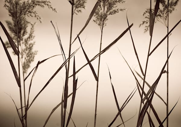 Bosque Grasses Art | Fine Art New Mexico