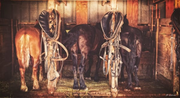 animals - wildlife - horses - metal art prints