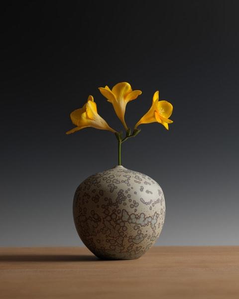 Three Freesia Blossoms