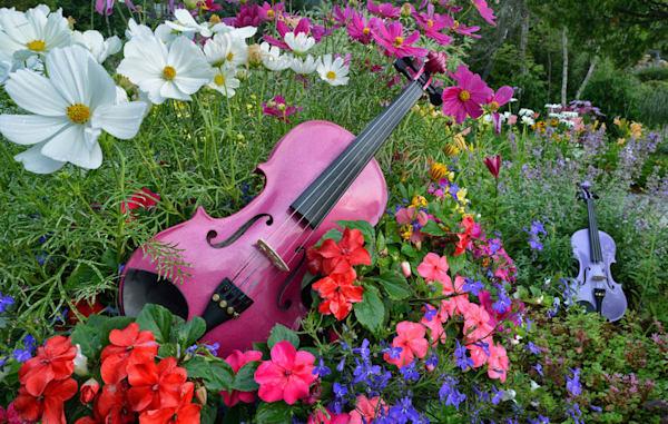 Violins in Bloom