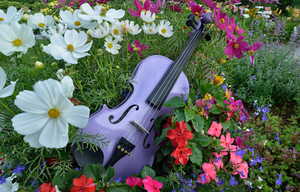 Violet Violin