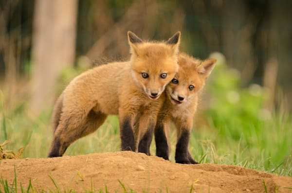 Close to You Wildlife Photography Wall Art Print Wall Art by Nature Photographer Melissa Fague