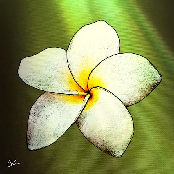 Tropical flower Plumeria over green featuring light effects