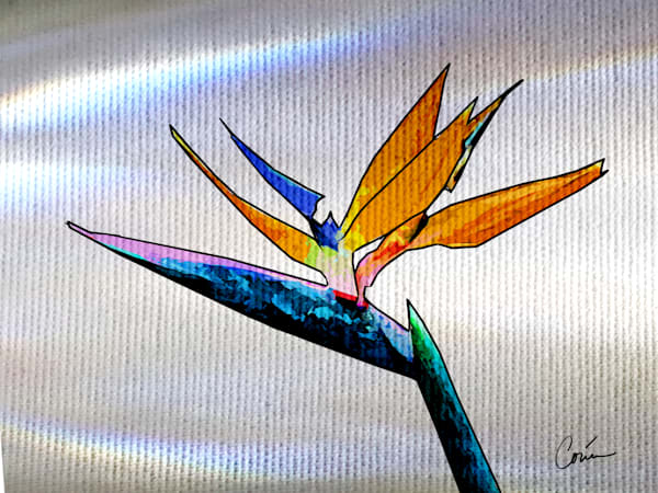 The tropical flower Bird of Paradise over a white background with light effects