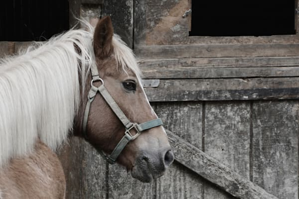 """Horse in Profile"""