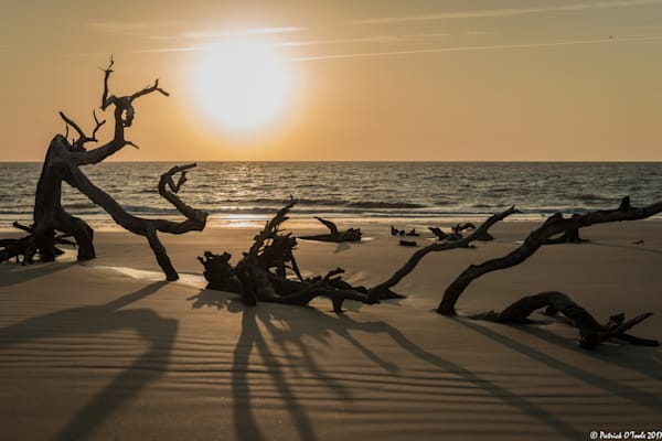 Driftwood and Shadows
