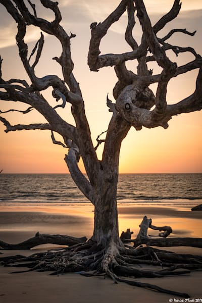 Driftwood Tree Photography Art | Patrick O'Toole Photography, LLC