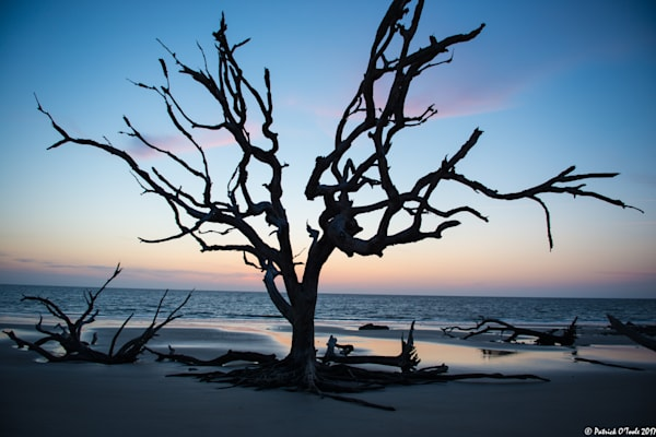 Driftwood Beach Photography Art | Patrick O'Toole Photography, LLC