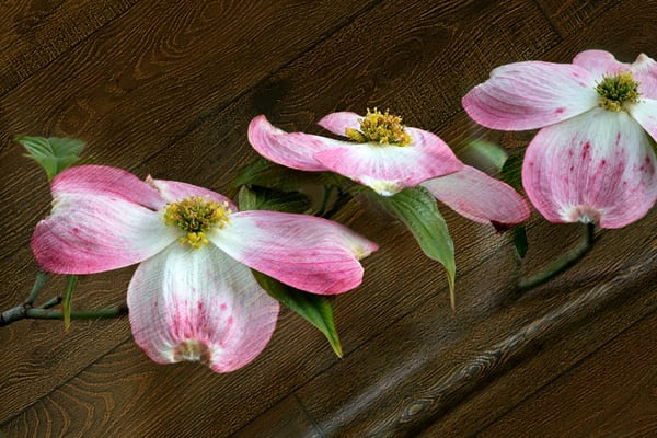 Flower Photographs   Fine Art Prints on Canvas, Paper, Metal & More by Mike Jensen