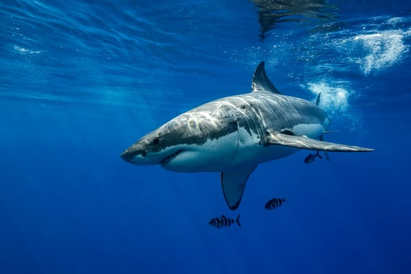 Shark Photography | Basking in the Sun by Leighton Lum